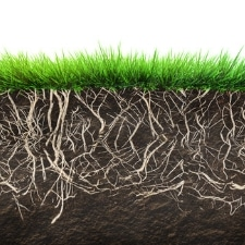 Benefits of Lawn Aerating