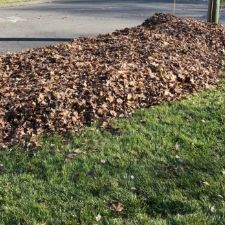 Leaves in Pile by Curb
