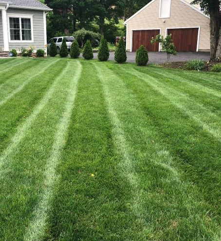 Spring Lawn Cleanup Services